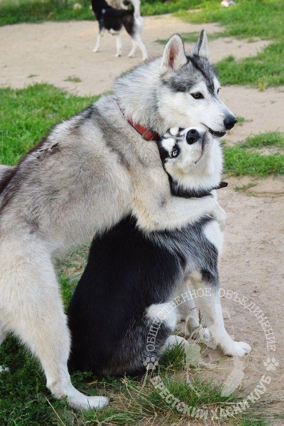 valentine's day cuddles - Dog - CTEEHHOE OPECTCKIM YKE