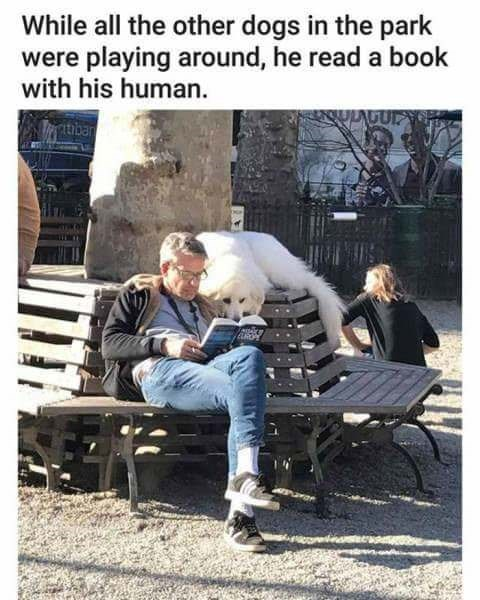 Photograph - While all the other dogs in the park were playing around, he read a book with his human. ULAGUP Tatban