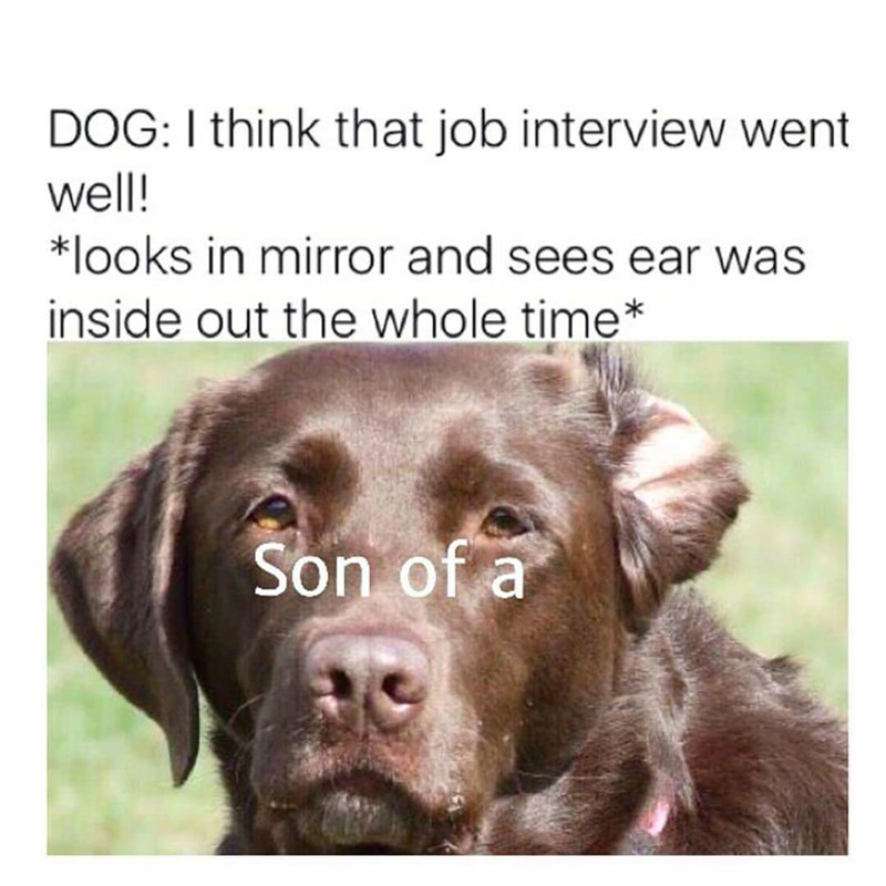 Dog - DOG: I think that job interview well! *looks in mirror and sees ear was inside out the whole time* Son of a