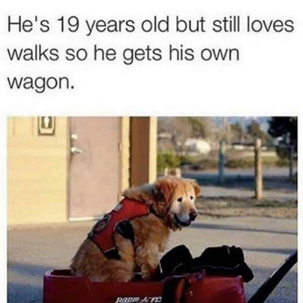 Dog - He's 19 years old but still loves walks so he gets his own wagon.