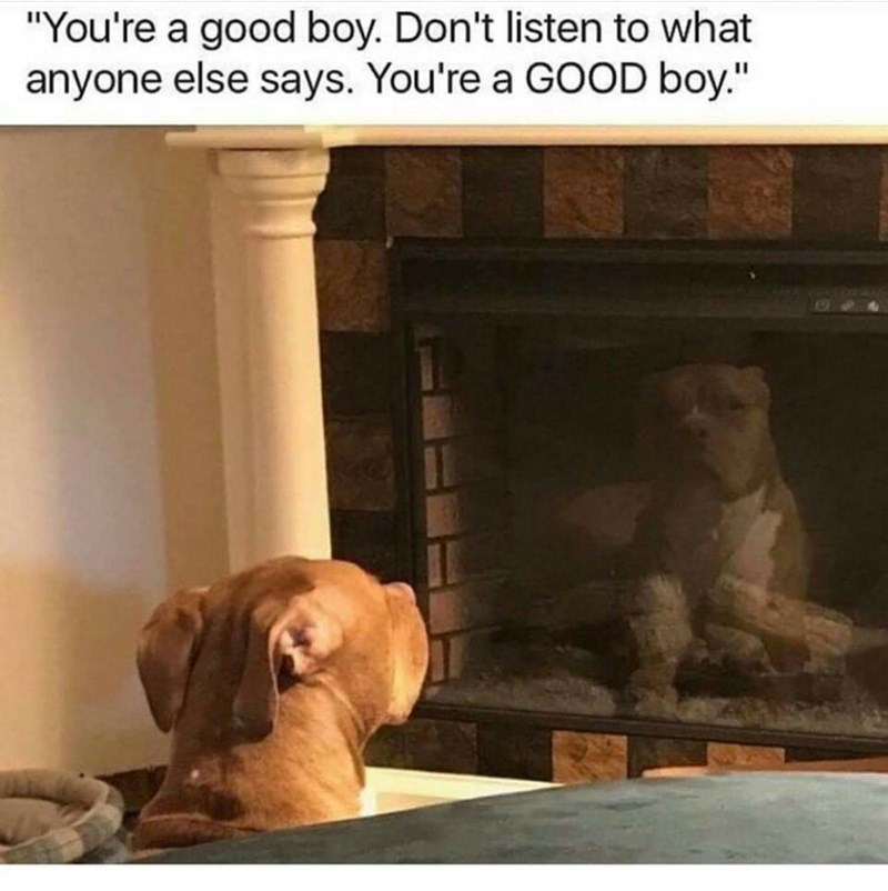 """Dog - """"You're a good boy. Don't listen to what anyone else says. You're a GOOD boy."""""""