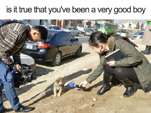 Vehicle - is it true that you've been a very good boy