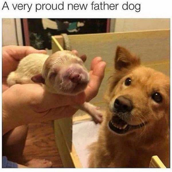 Dog - A very proud new father dog