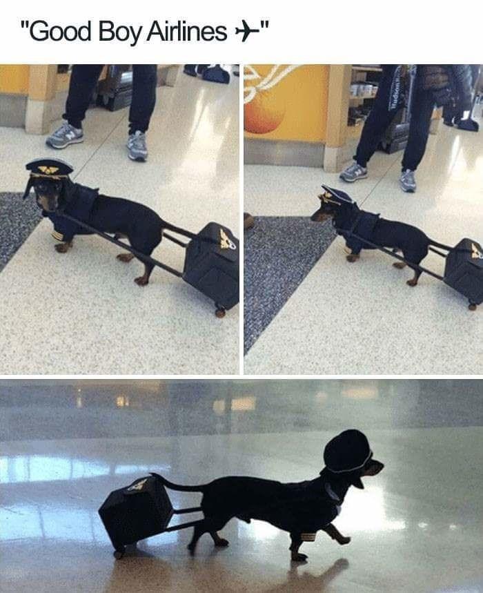 "Dog - ""Good Boy Airlines"" auospn"