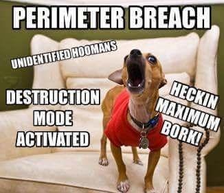 Dog - PERIMETER BREACH UNIDENTIFIED HOOMANS HECKIN MAXIMUM BORK! DESTRUCTION MODE ACTIVATED