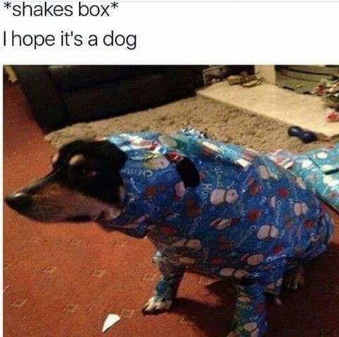 Canidae - *shakes box* I hope it's a dog