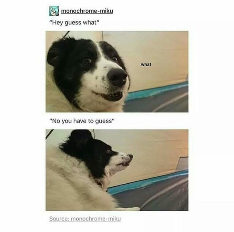 "Dog - monochrome-miku ""Hey guess what"" what ""No you have to guess"" Source: monochrome-miku"