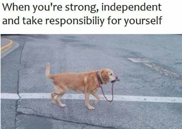 Dog - When you're strong, independent and take responsibiliy for yourself