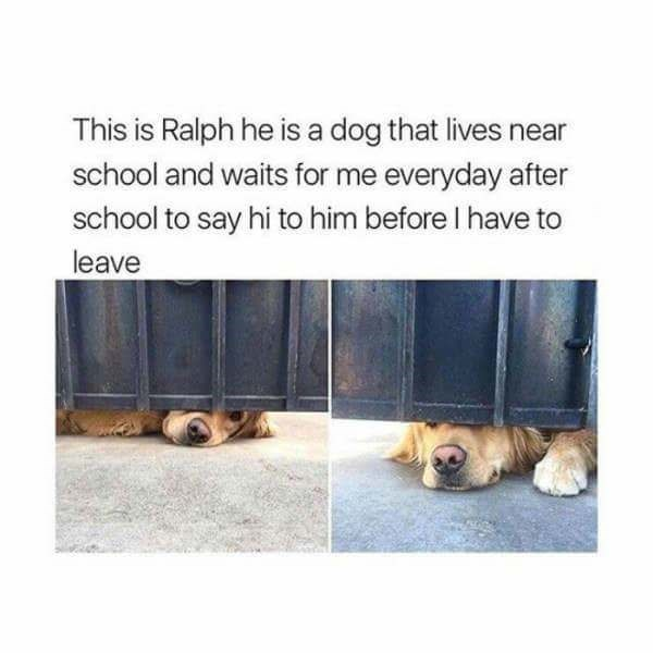 Text - This is Ralph he is a dog that lives near school and waits for me everyday after school to say hi to him before I have to leave