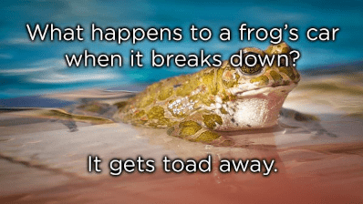 Adaptation - What happens to a frog's car when it breaks down? It gets toad away.