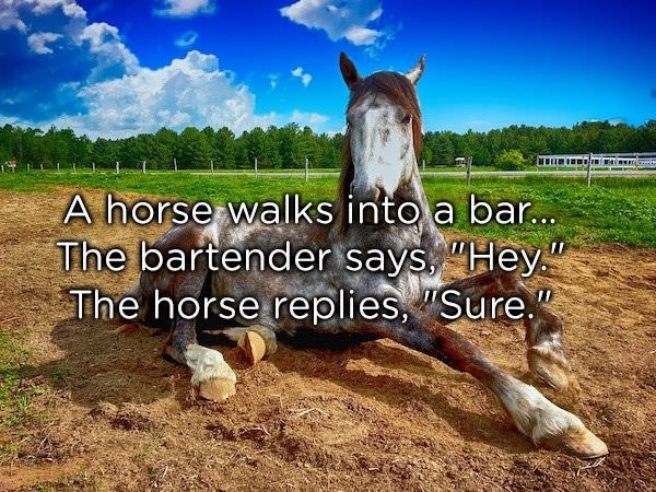 "dad joke - Horse - A horse walks into a bar... The bartender says, ""Hey"" The horse replies, ""Sure"