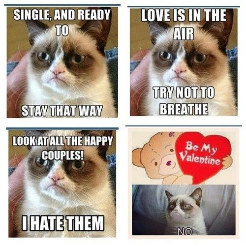 Cat - LOVE IS IN THE AIR SINGLE, AND READY TO TRY NOT TO BREATHE STAY THAT WAY LOOKATALL THE HAPPY COUPLES! Be My Valentine OHATE THEM NO