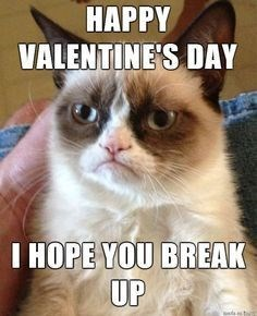 Cat - HAPPY VALENTINE S DAY I HOPE YOU BREAK UP