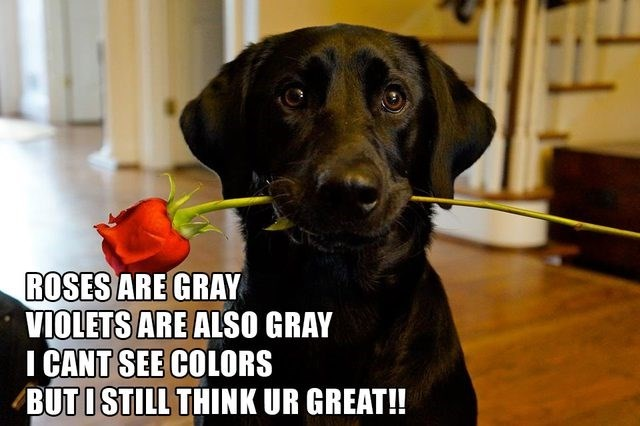 Dog breed - ROSES ARE GRAY VIOLETS ARE ALSO GRAY I CANT SEE COLORS BUTISTILL THINK UR GREAT!!