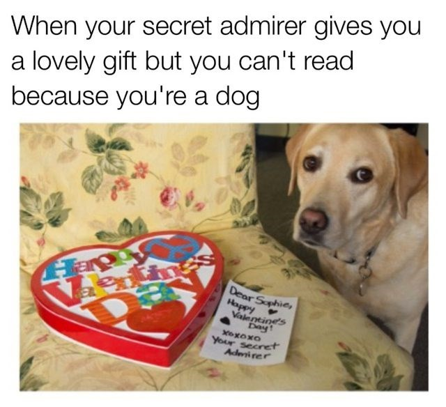 Text - When your secret admirer gives you a lovely gift but you can't read because you're a dog Dear Sophies hddo Day Valentines oxoxo Your secret Adwirer
