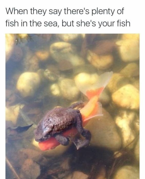 fish meme of a frog riding a fish
