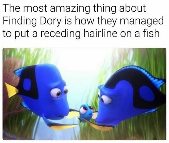 fish meme about Finding Dory having a fish with a receding hairline