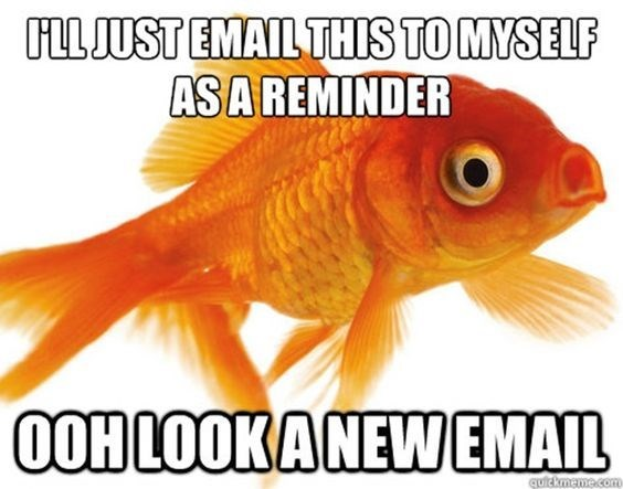 fish meme about emailing yourself and getting surprised