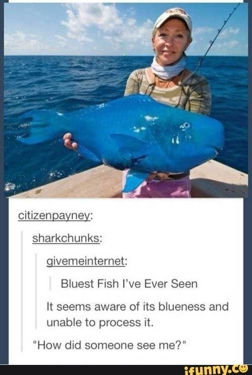 fish meme of a fish that matches the color of the ocean