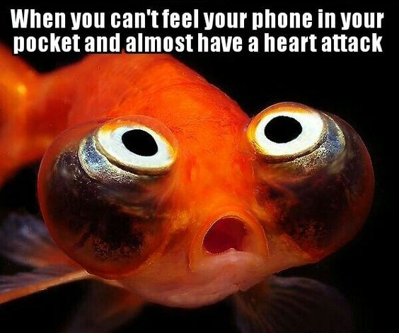 fish meme about becoming nervous when you can't find your phone