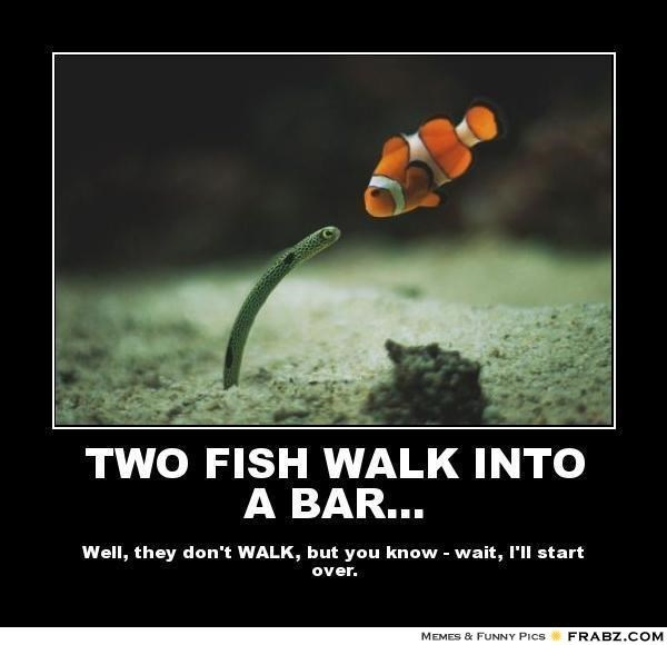 24 Hilarious Fish Memes Proving You Can Be Funny Without Even Talking I Can Has Cheezburger