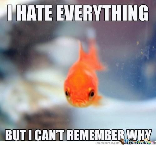 fish meme about hating everything