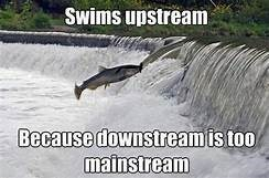 fish meme about fish flying downstream because they don't want to be mainstream