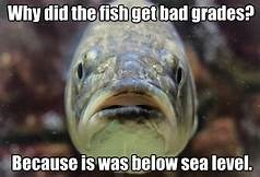 fish meme about a fish getting bad grades because it was below sea level