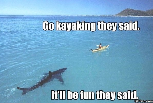 Whale shark - Go kayaking they said. Itll be fun they said GIFSec.com