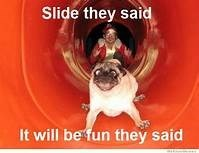 Pug - Slide they said It will be fun they said