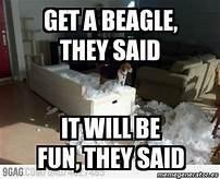 Photo caption - GETA BEAGLE THEY SAID ITWILL BE FUN THEY SAID 9GAG CO