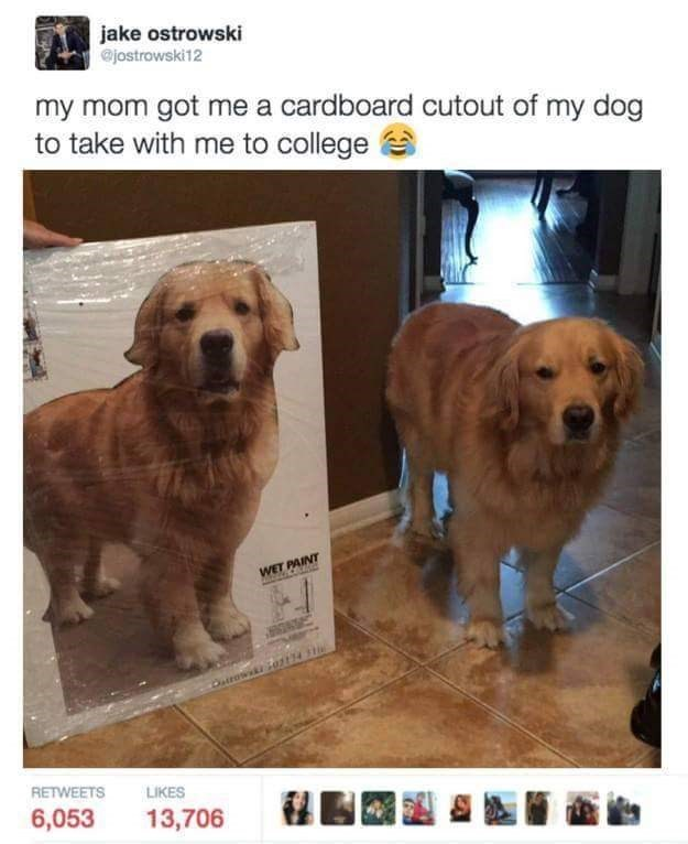 Dog - jake ostrowski @jostrowski12 my mom got me a cardboard cutout of my dog to take with me to college WET PAINT Mh CE Dairowski RETWEETS LIKES 6,053 13,706