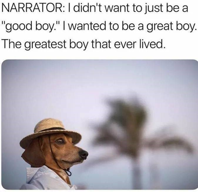 """Dog - NARRATOR: I didn't want to just be a """"good boy."""" I wanted to be a great boy. The greatest boy that ever lived."""