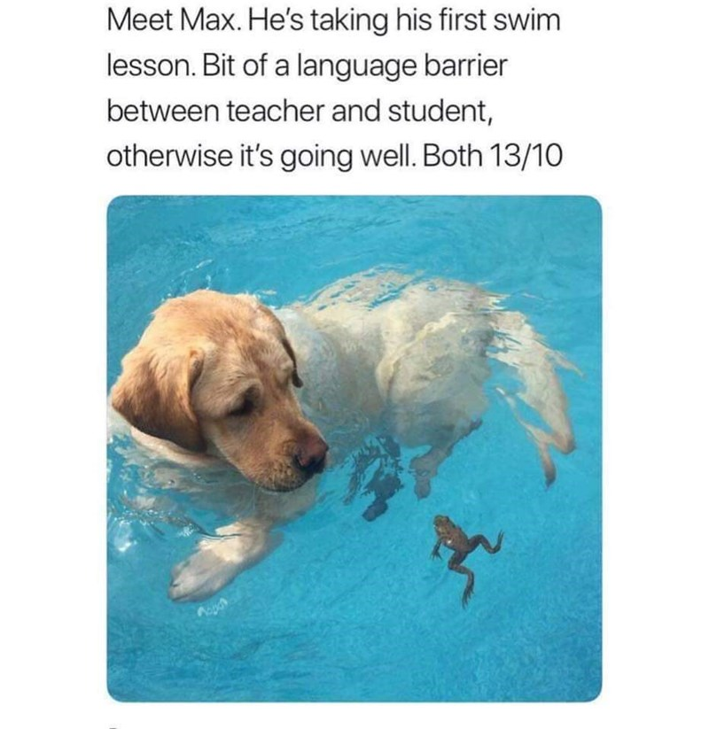Dog - Meet Max. He's taking his first swim lesson. Bit of a language barrier between teacher and student, otherwise it's going well. Both 13/10