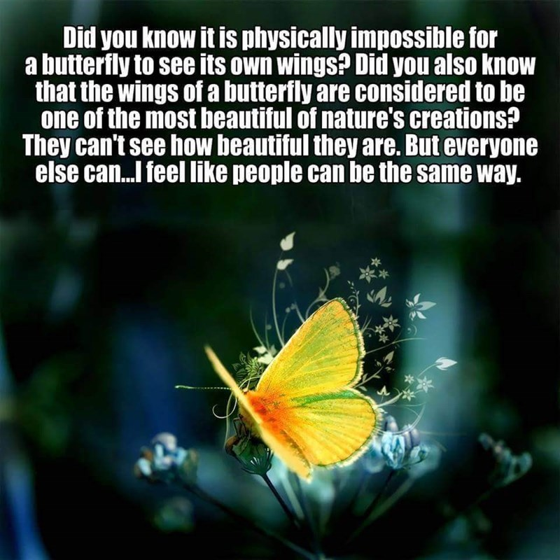Butterfly - Did you know it is physically impossible for a butterfly to see its own wings? Did you also know that the wings of a butterfly are considered to be one of the most beautiful of nature's creations? They can't see how beautiful they are. But everyone else can...I feel like people can be the same way.