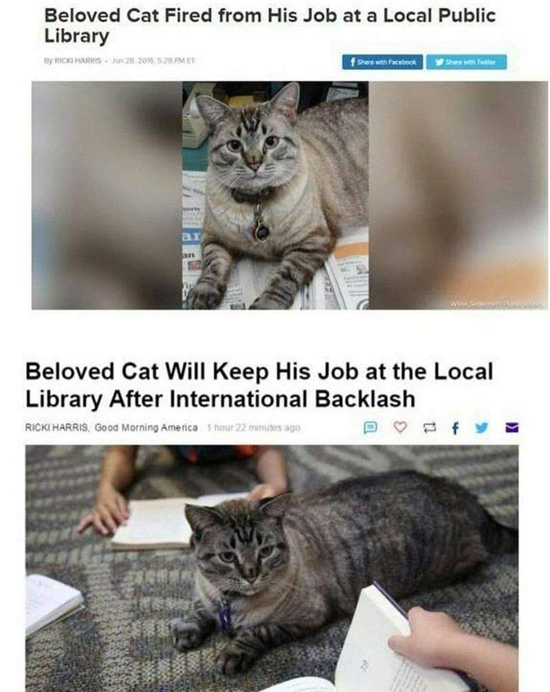 Cat - Beloved Cat Fired from His Job at a Local Public Library By ICKI HARRIS-Jn 28 2016,528 PM ET fShere with facebook Shere wth Teber ar W Beloved Cat Will Keep His Job at the Local Library After International Backlash f RICKI HARRIS, Good Morning America hour 22 minutes ago
