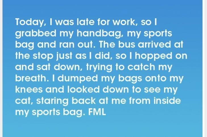 Text - Today, I was late for work, sol grabbed my handbag, my sports bag and ran out. The bus arrived at the stop just asI did, so I hopped on and sat down, trying to catch my breath. I dumped my bags on to my knees and looked down to see my cat, staring back at me from inside my sports bag. FML