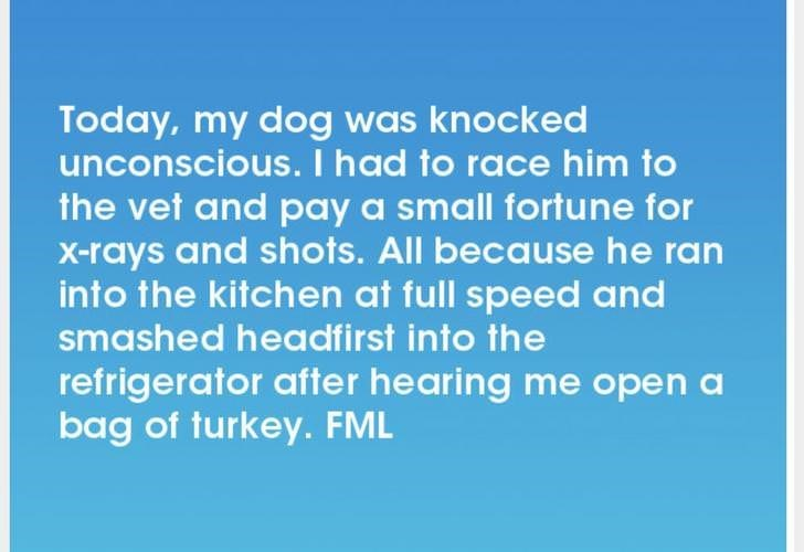 Text - Today, my dog was knocked unconscious. I had to race him to the vet and pay a small fortune for X-rays and shots. All because he ran into the kitchen at full speed and smashed headfirst into the refrigerator after hearing me open a bag of turkey. FML