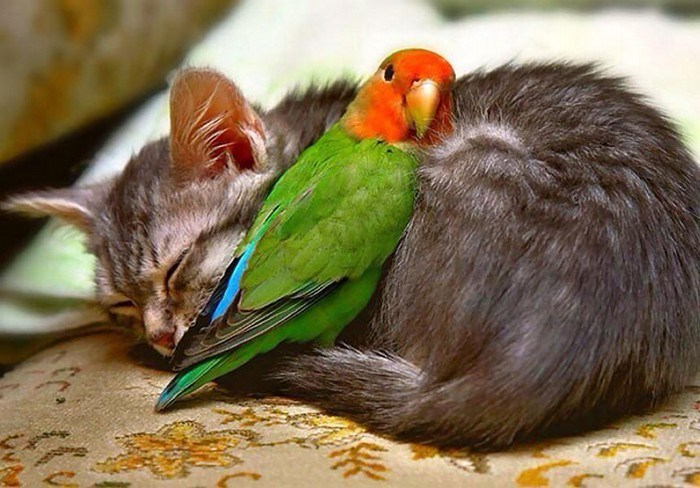 animals napping together - Bird