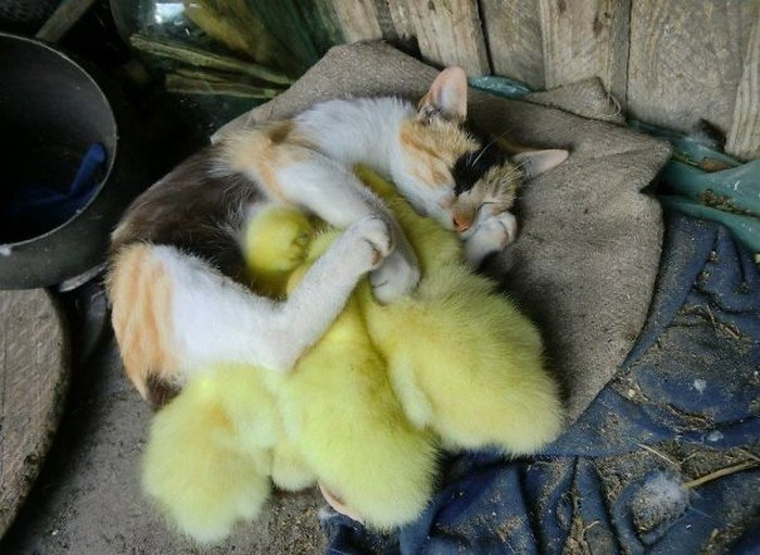 animals napping together - Cat