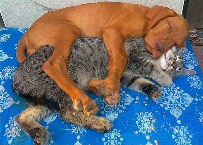 animals napping together - Mammal