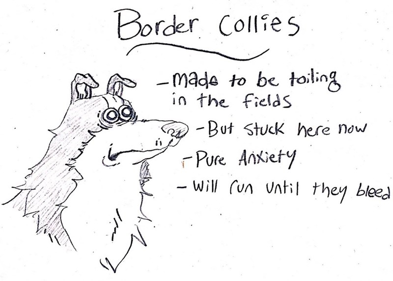 dog - Text - Border Collies mada to be toling in the fields -But Stuck here now FPure AnKiety Will un Until they bleed