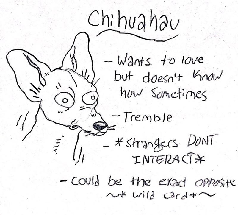 dog - Text - Chihuahau Wants to love but doesn't na ho Sometimes Tremble Strangsrs DONT INTERACT COUld be the exact Opnte N* wild Card