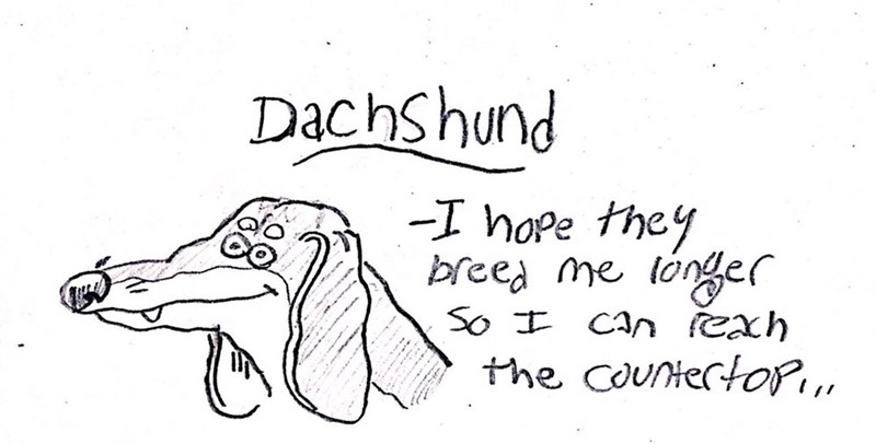 dog - Text - DachShund -I hope they breea me longer So CAn Cxh the counterto,