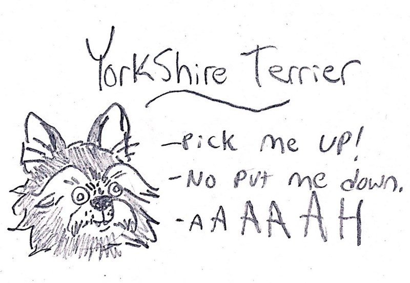 dog - Text - YorkShire Terier ick me UP No Pvt me down, A A AA AH