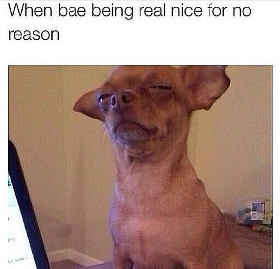 Dog - When bae being real nice for no reason