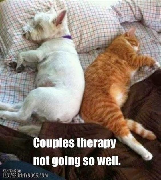 Cat - Couples therapy not going so well. GAPTIONS B LOVEFUNNYDOGS.COM