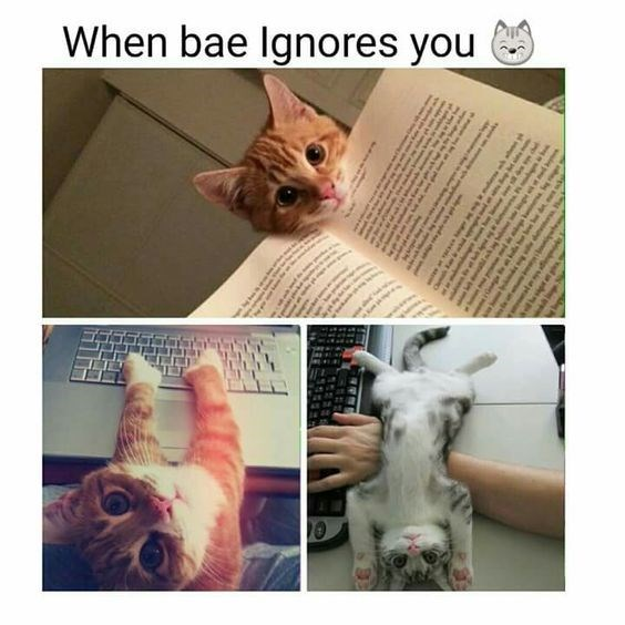 Cat - When bae Ignores you E o e sin o