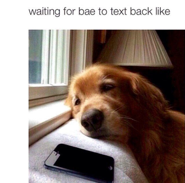 Dog - waiting for bae to text back like