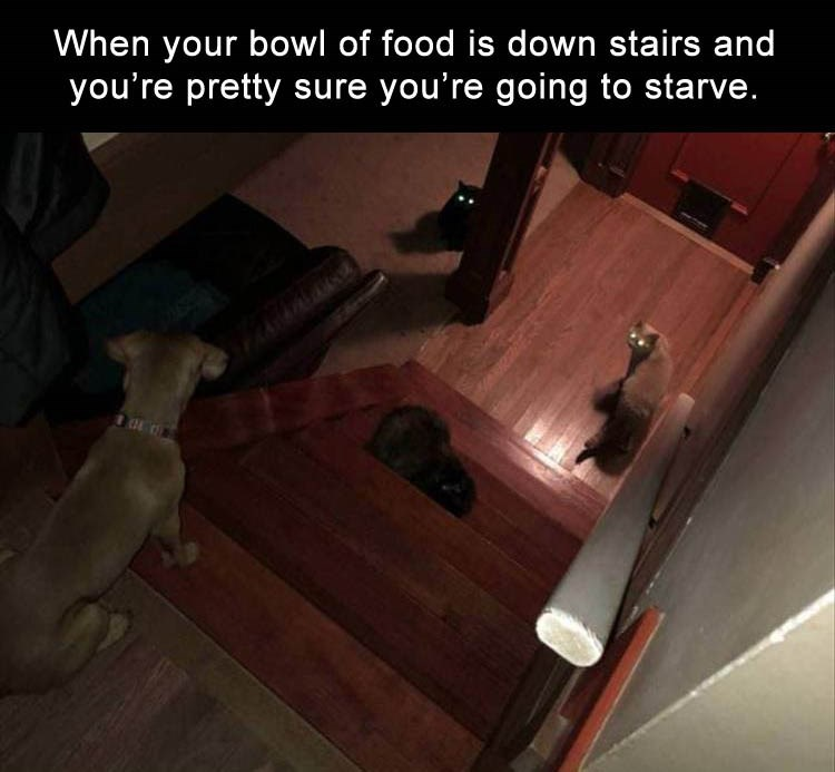 Hardwood - When your bowl of food is down stairs and you're pretty sure you're going to starve.